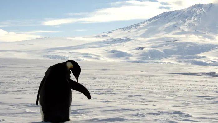 samotny pingwin
