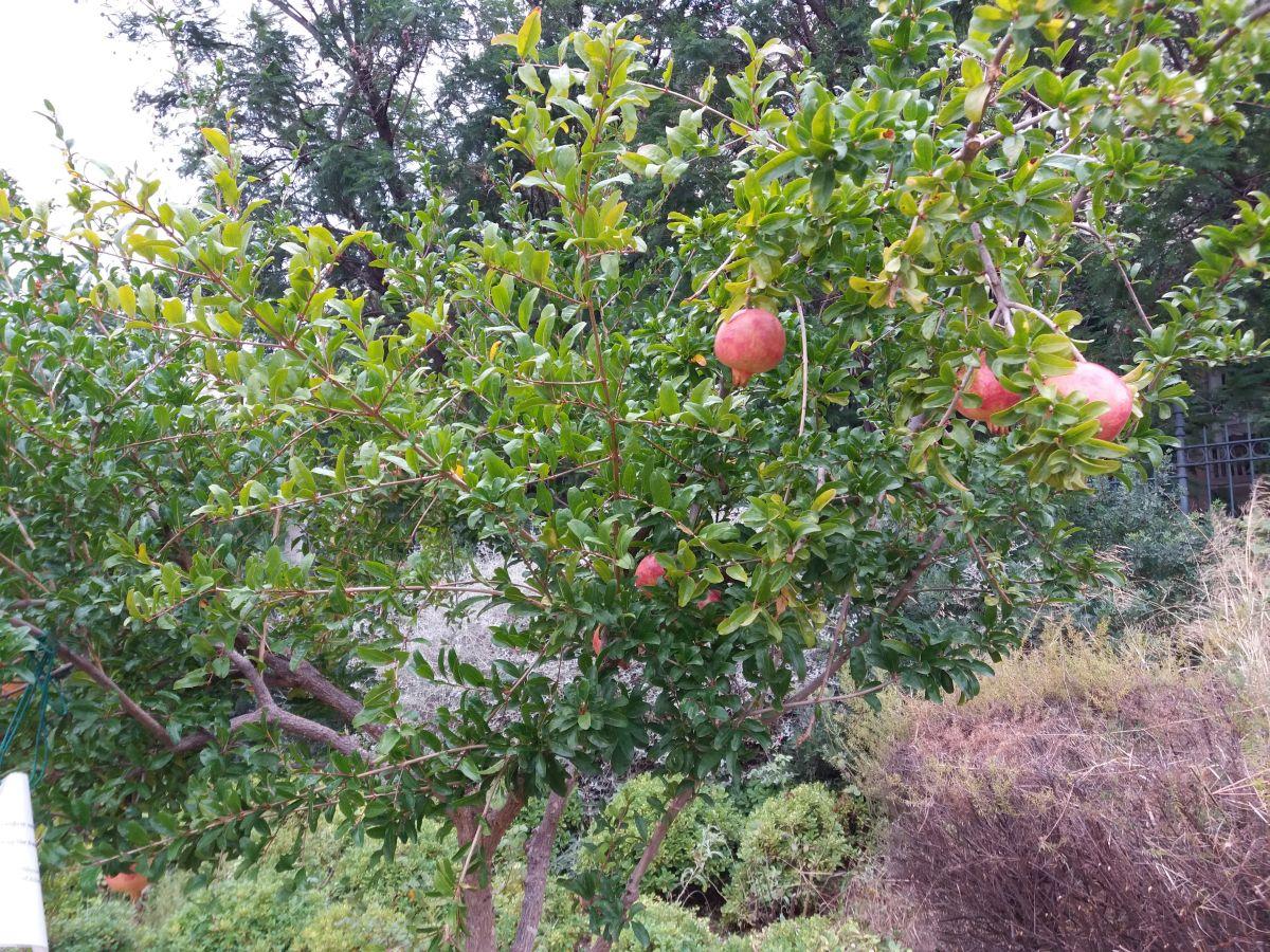 drzewa na terenie liceum arystotelesa